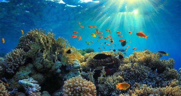 marine-sanctuary